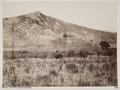 Fotografi av fält där slaget vid Marathon utkämpades - Hallwylska museet - 103083.tif