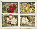 Four Floral Compositions on One Sheet (Boston Public Library).jpg