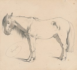 Study of a Horse with Long Mane II.