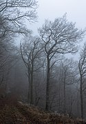 GR 16 in Parc naturel Ardenne méridionale on a foggy winter afternoon (DSCF6005).jpg