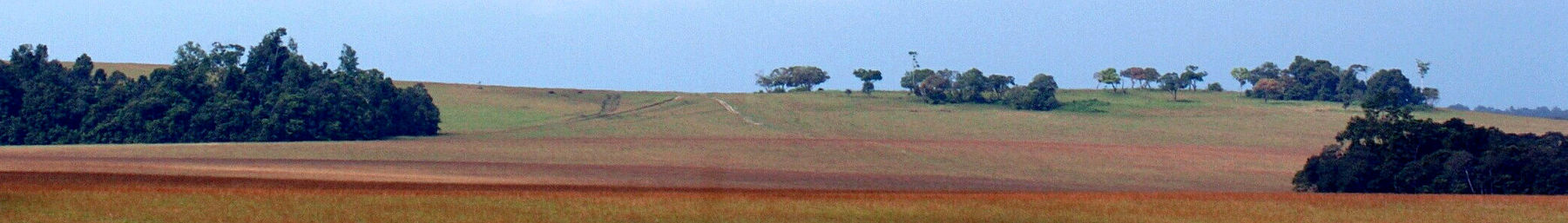 Gabon banner Grassland with clumps of trees.jpg