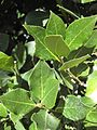 Gardenology-IMG 4927 hunt10mar.jpg