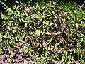 Gardenology.org-IMG 9525 rbgm10dec.jpg