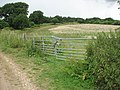 Gate into a field - geograph.org.uk - 1388289.jpg