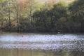 Gedern Steinberg Spiessweiher Ducks NR 82683 E.png