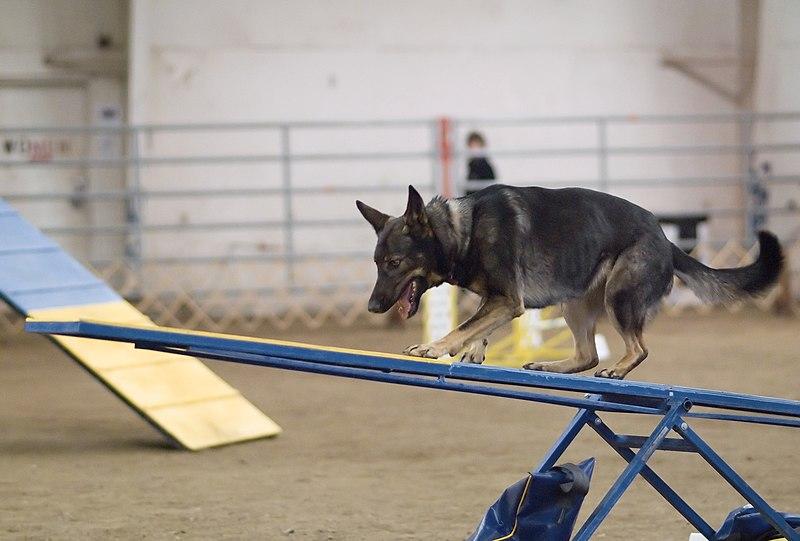 Dog Agility Training Muskego