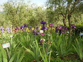 Giardino dellIris Botanical garden in Florence, Italy, specializing in the cultivation of iris flowers