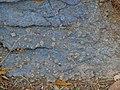 Glaucophane Lawsonite Schist Syros Greece.jpg