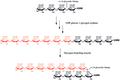 Glycogen Branching Enzyme Scheme.tif