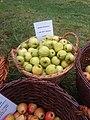 Golden Delicous Apple cultivars as grown at Priorwood Garden in 2020 20.jpg