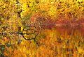 Goldener Herbst im Naturschutzgebiet Heisinger Bogen.jpg