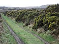 Gorse hedge in flower - geograph.org.uk - 359111.jpg