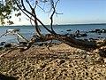 Grande plage de pointe aux sables - panoramio.jpg