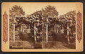 Grape arbor at Germantown, from Robert N. Dennis collection of stereoscopic views 2.jpg