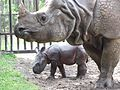 Greater one-horned rhino and baby at White Oak.jpg