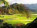 Green Fields of Kauai, Hawaii (4990659640).jpg