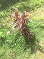 Green Grass with flower 001.jpg