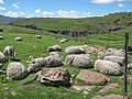 Growing wool, if you listen carefully you can hear it... - panoramio.jpg