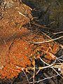 Grumeteich bb01.jpg