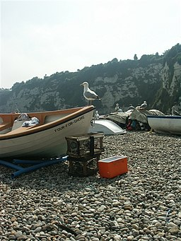 Gull and boats, Beer - geograph.org.uk - 231511