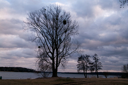 Gutspark neukladow baum an havel