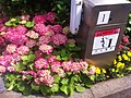 HK Central 禮賓府 Government House 開放日 Open Day red flowers n Mind the carpark gate barrier warning April-2012 Ip4.jpg