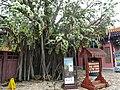HK Ngon Ping Village 昂坪市集 mkt (36) Bodhi Wishing Shrine tree April 2016 DSC.JPG