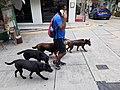 HK SW 上環 Sheung Wan 太平山街 Tai Ping Shan Street dog walking March 2020 SS2 01.jpg