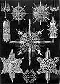 Haeckel Acanthophracta.jpg