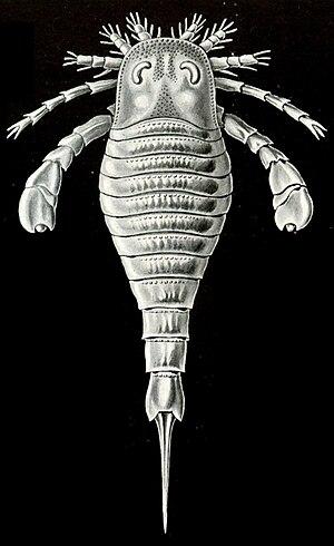 Eurypterid - Eurypterid from Ernst Haeckel's Kunstformen der Natur (1904)