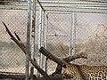 Hai Bar Yotvata Nature Reserve 23.jpg