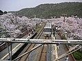 Hanwasen-yamanakadani 221 PICT0070-2.JPG