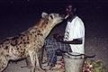 Harar Hyena.jpg