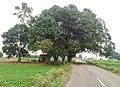Harinder Kang di Motor, Mehpalon, Rupnagar, Punjab, India - panoramio.jpg