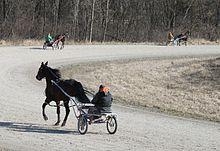 Harness racing - Wikipedia