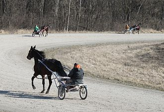 Harness racing - Harness racing horses being exercised, Salem Township, Michigan