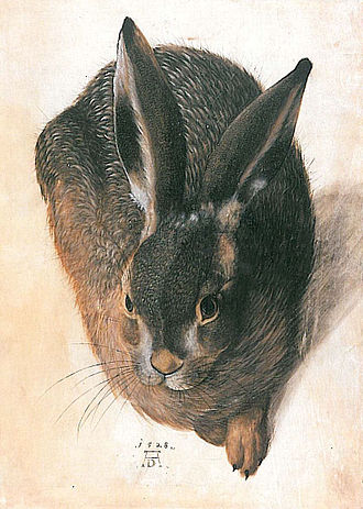 Young Hare - Hans Hoffmann's 1528 copy of the hare, which adapts freely from the source, still bears the AD monogram.