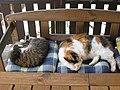 Hauskatzen auf Gartenbank.jpg