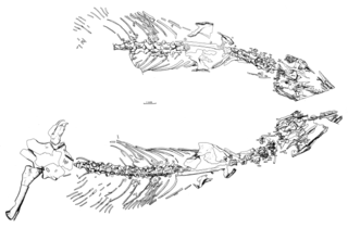 <i>Heleosaurus</i> genus of synapsid