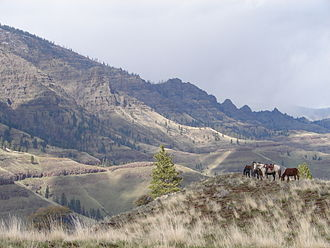 Hells Canyon Wilderness (Oregon and Idaho) - Horses in the wilderness