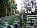 Henallt Wood - geograph.org.uk - 669439.jpg
