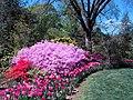 Hillwood Gardens in April (16977406673).jpg