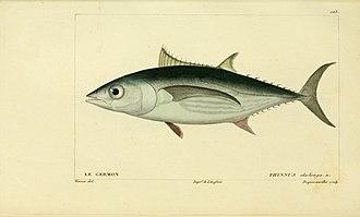 Albacore - Image: Histoire naturelle des poissons (10438834583)