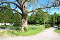 Hofgarten - panoramio (1).jpg