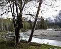Hoh river scenic trees clouds NPS Photo (17287389016).jpg