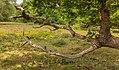 Hondsrug, De Strubben-Kniphorstbosch 004.jpg