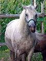 Horse Cabalo 019eue.jpg