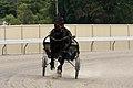 Horse Trotting in Goulburn (Duke Arthur) (6700572681).jpg