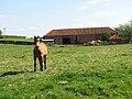 Horse in paddock - geograph.org.uk - 1278979.jpg