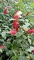 Hortus botanicus caliensis 82.jpg